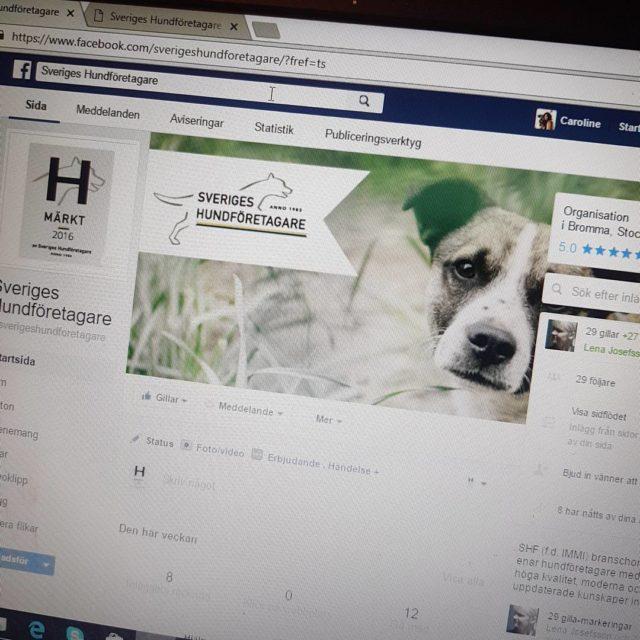 In och gilla oss p Facebook vettja sverigeshundforetagare facebook sverigeshundforetagarehellip
